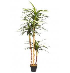 DRACENA MARGINATA ARTIFICIAL 183 CM