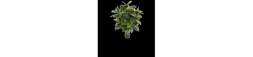 Plantas Artificiales de Interior y Exterior - Compra al Mejor Precio